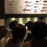 museu (7)